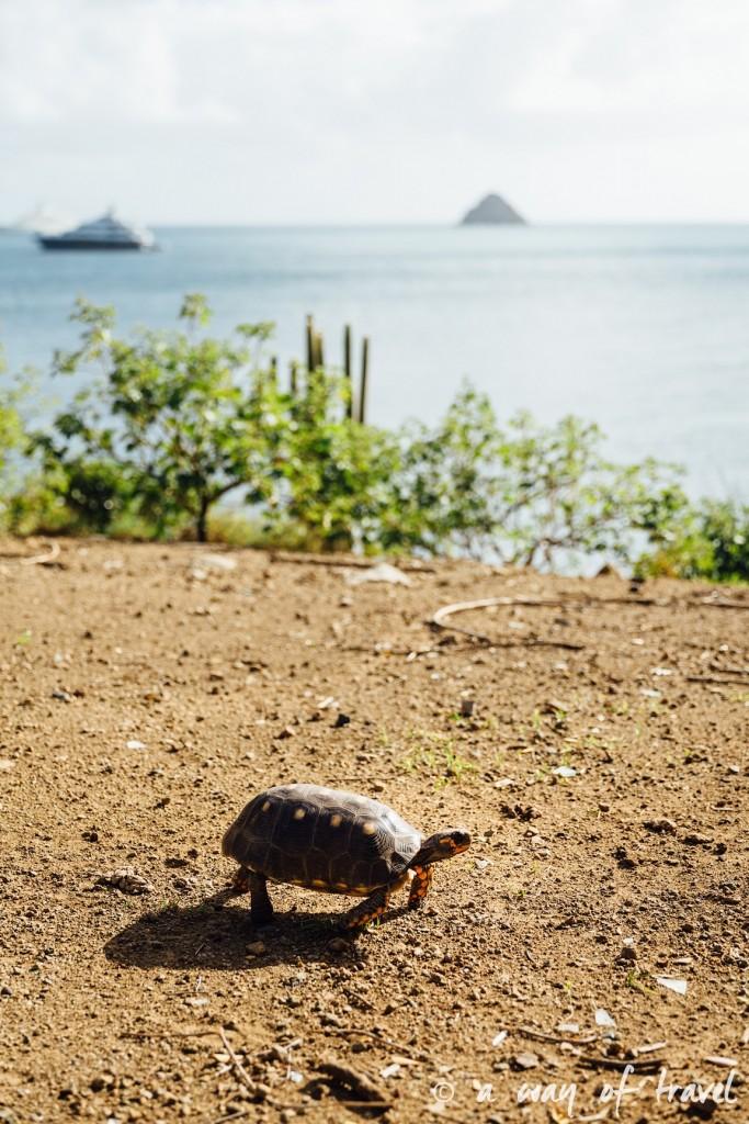 saint barth martin antilles françaises visiter guide plage barthélemy 18