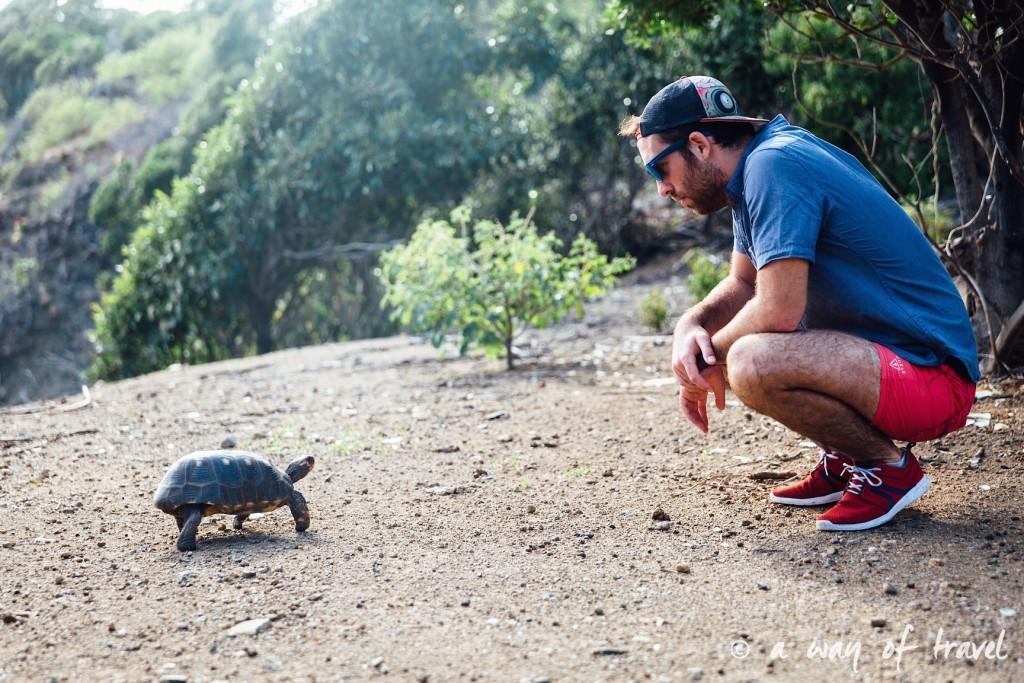 tortues saint barth martin antilles françaises visiter guide plage barthélemy 17