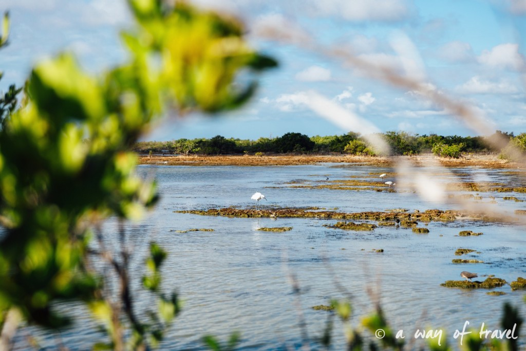 Baie des cochons playa llarga giron cuba 4