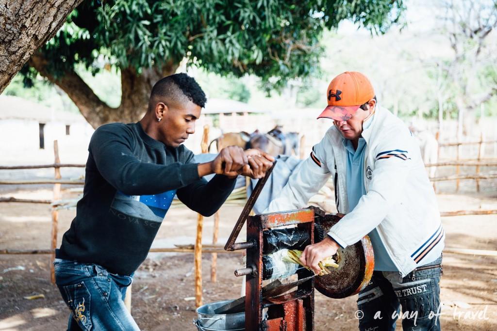 Visiter cuba guide trinidad canne a sucre 45