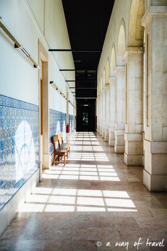 5 Lisbonne muséum histoire naturelle 1