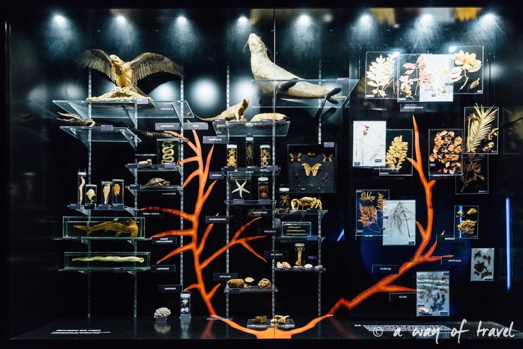 5 Lisbonne muséum histoire naturelle 4