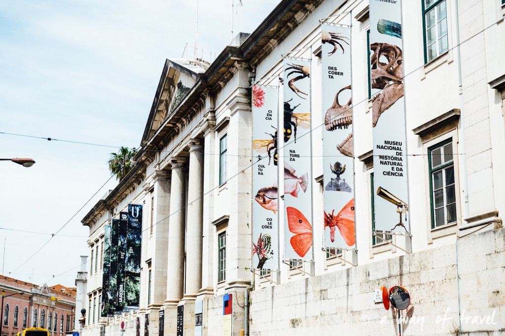 5 Lisbonne muséum histoire naturelle 6
