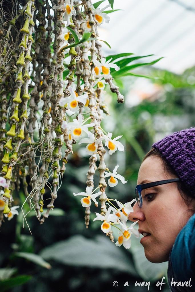 montreal jardin botanique 10