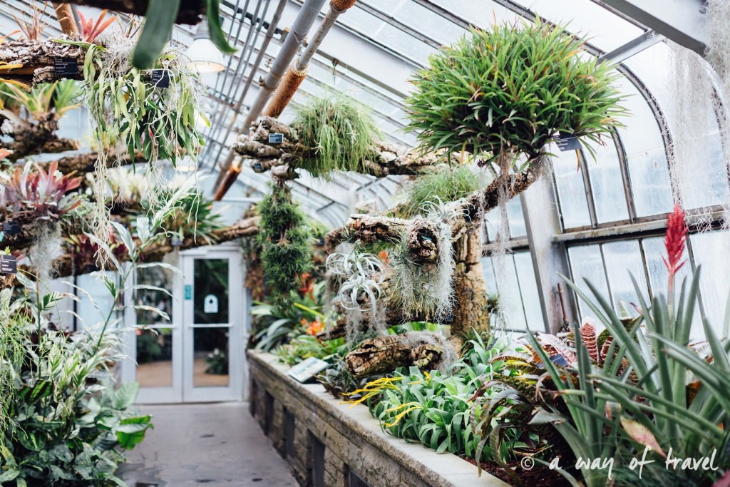 montreal jardin botanique 12