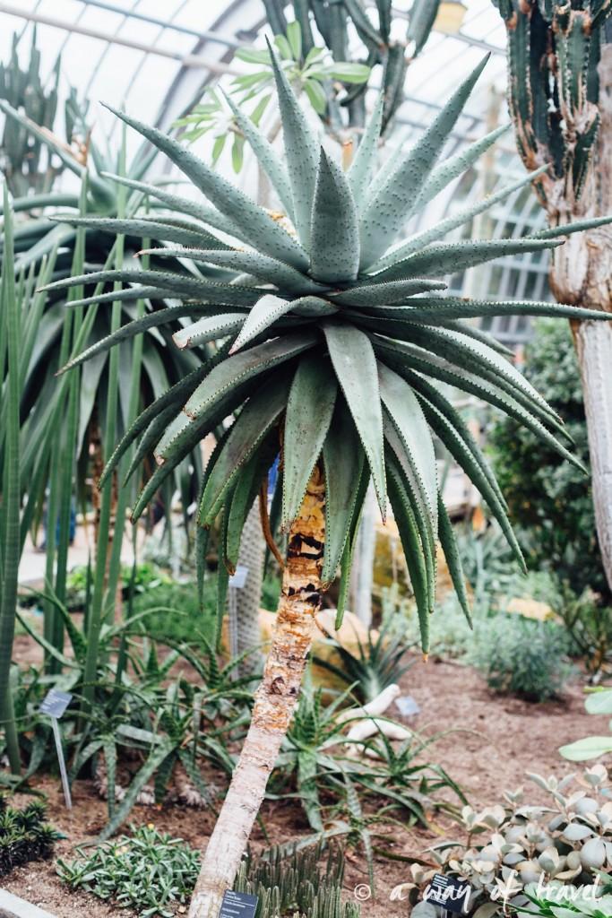 montreal jardin botanique 13