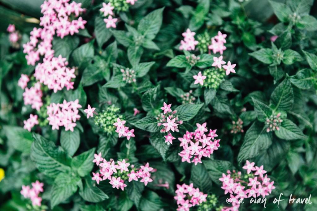 montreal jardin botanique 20