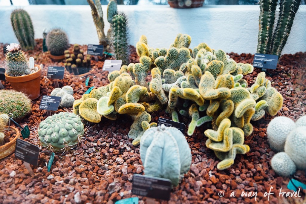 montreal jardin botanique 26