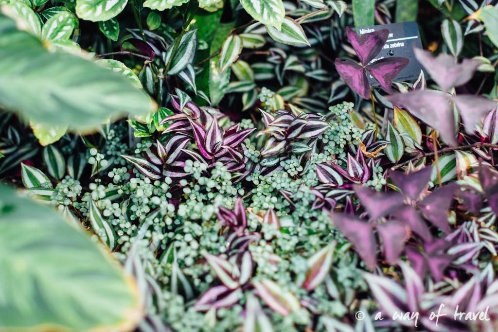 montreal jardin botanique 4