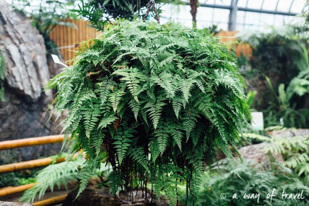 montreal jardin botanique 8
