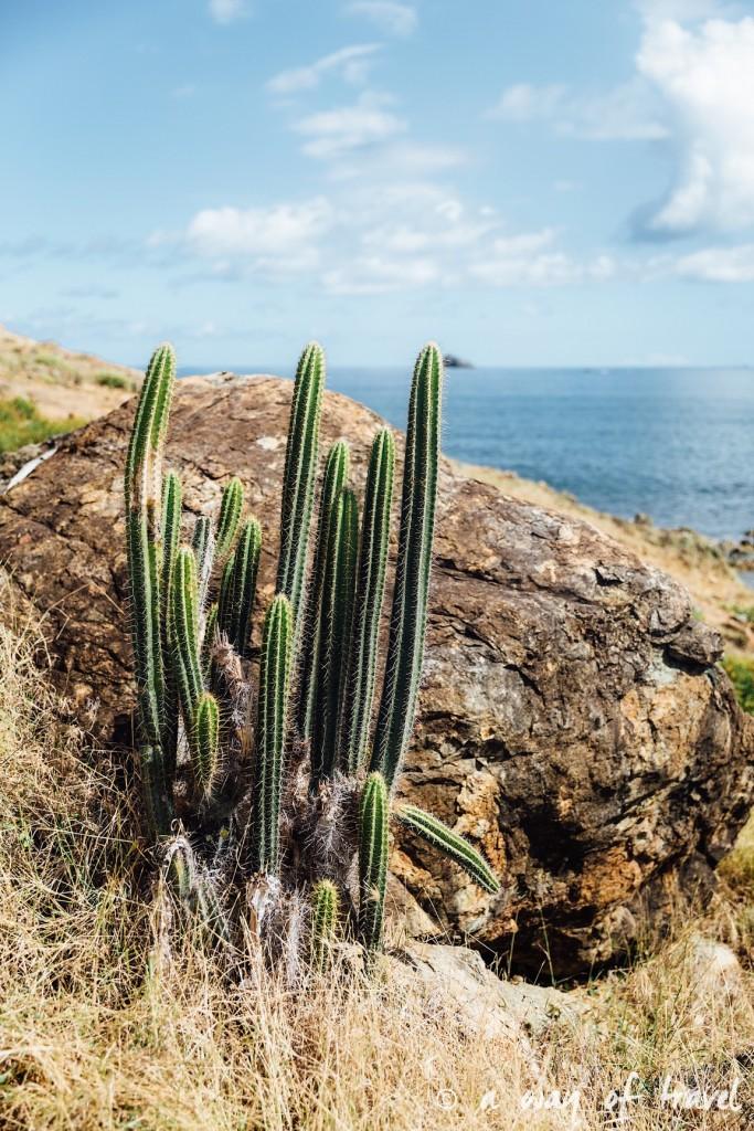 Saint Martin Caraibes Piscines naturelles Sint Maarten guana Bay 14