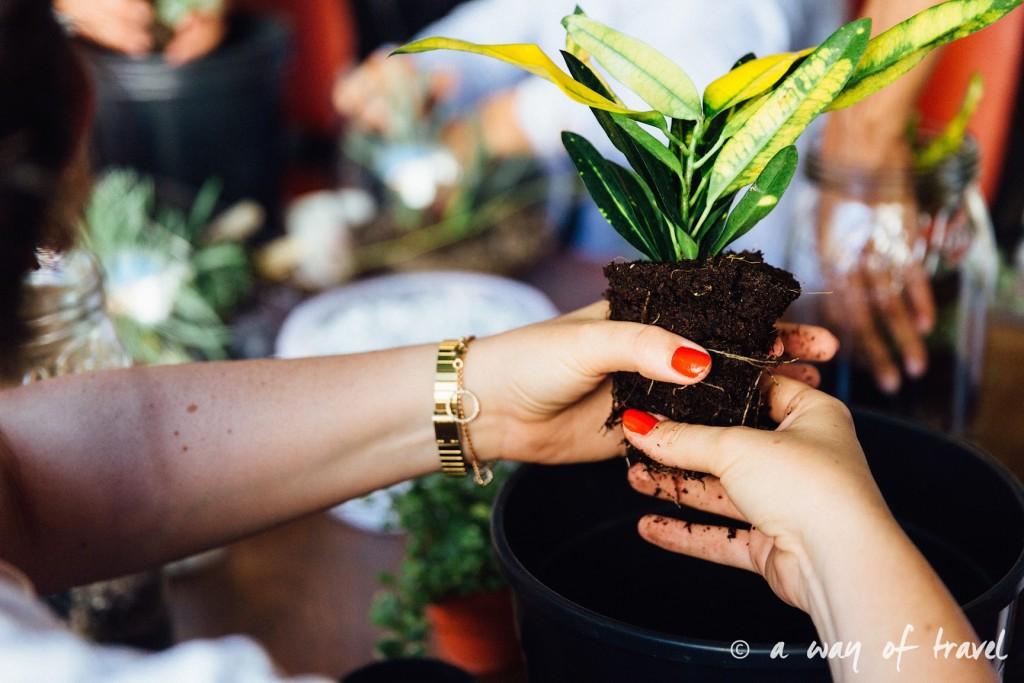 ateliet poppy figue terrarium fleuriste toulouse-16