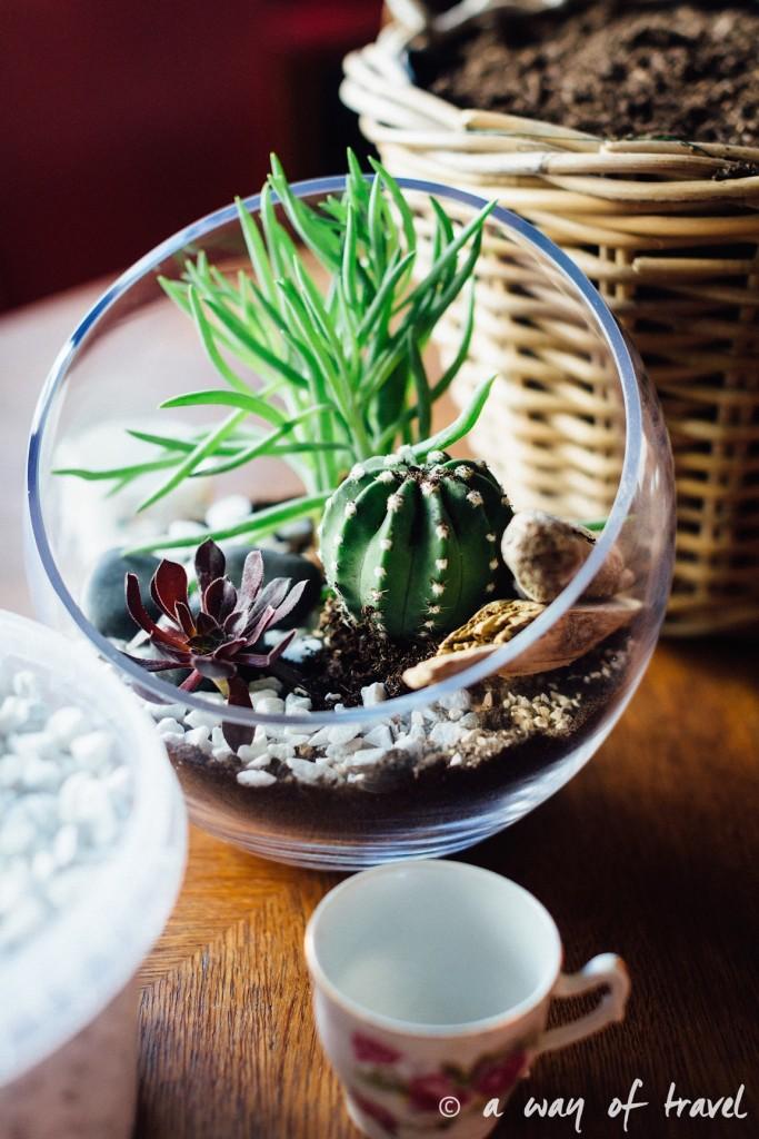 ateliet poppy figue terrarium fleuriste toulouse-2