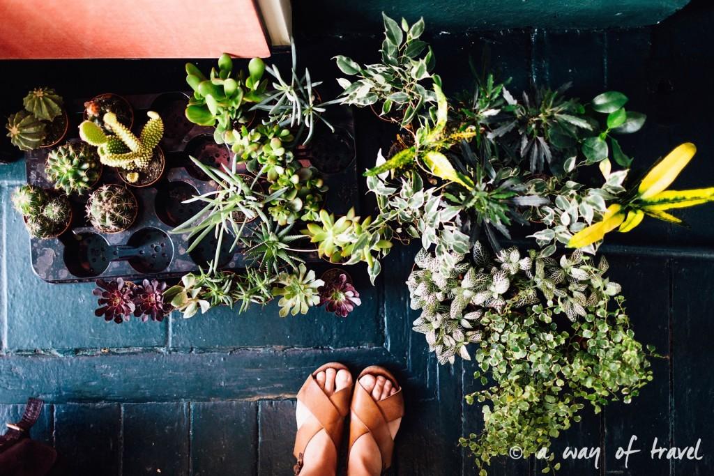 ateliet poppy figue terrarium fleuriste toulouse-8