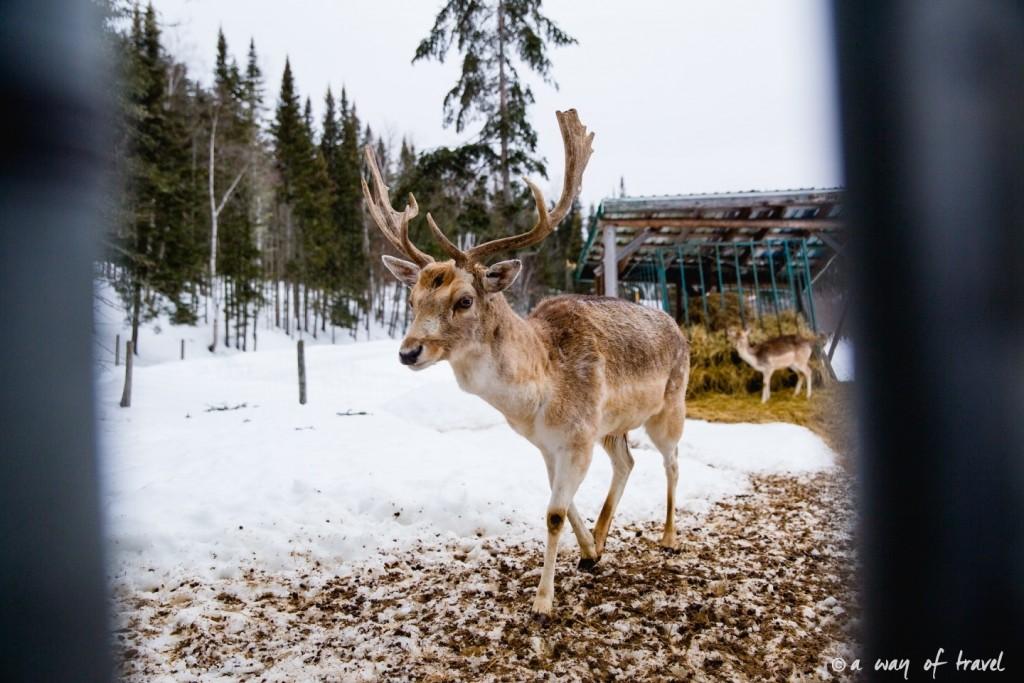Visiter le quebec hiver 35